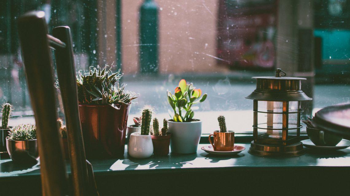 10 tips om zelf natuurlijke plantenvoeding te maken!