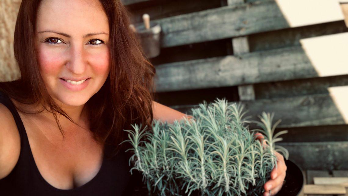 Kruiden; De kerrie plant
